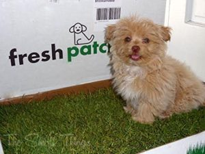 A patch of grass to help dogs go to the bathroom. Meant for small dogs or if you are traveling.