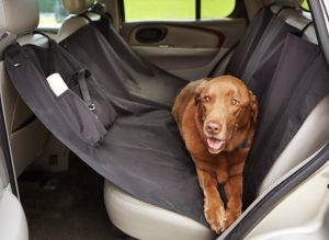 A seat cover for your car to make sure your dog is comfortable. Less hair gets on the seat.