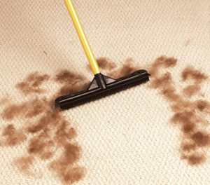 A broom to remove dog hair fur from carpets, hardwood floors, and clothes. Great for the car.