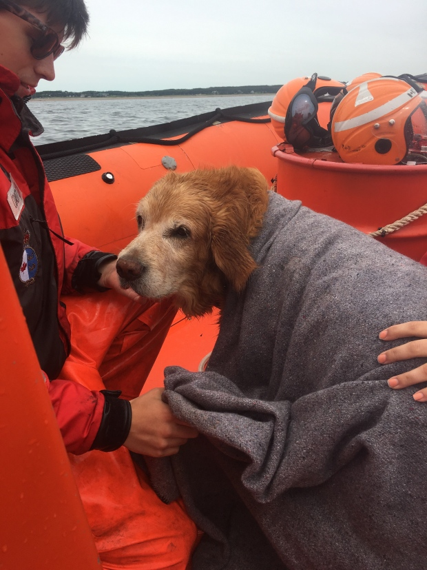Dog Rescued by Canadian Coast Guard