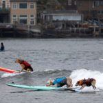 Three dogs each on a separate surf board. They are competing in the world dog surfing tournament
