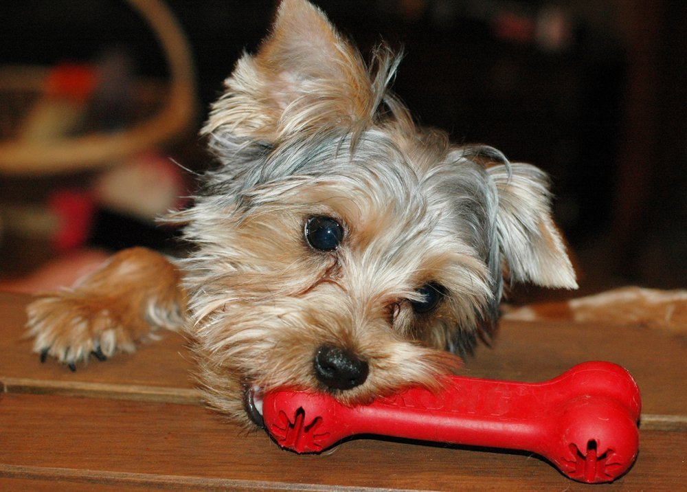 Classic Dog Toys by Kong