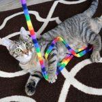 Cat dancing toy